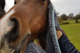 Henry Wag Equine Noodle Glove Towel Trial